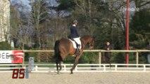 Équitation : Concours national de dressage (Vendée)