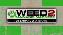 WEED 2: Cannabis Madness, reportage du Dr Sanjay Gupta (CNN) (2014) (STFR)