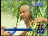 6700 hectáreas, perjudicadas por el invierno en Manabí