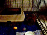 Jiminy Cricket in his isolation cage