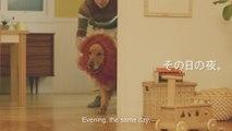 Bébé préfère sa peluche de lion que son gros chien bien vivant ! Pub Amazon