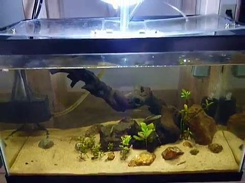 10 Gallon Aquaponics Setup