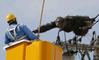 Japon : un chimpanzé s'échappe et sème la panique en ville