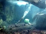 Kaiyukan Aquarium Osaka Japan Forest