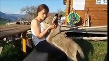 Quand un âne pense être un chiot mdr