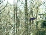 Aigles Espaces Rambouillet
