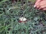 Small homemade smoke bomb
