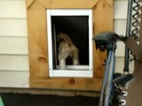 At Ninna's Road to Rescue... the doggies are in and out all day via the doggie door!!