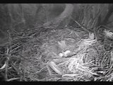 DECORAH EAGLES  3/15/2015  6:58 AM  CDT  DAD IN TO TAKE OVER