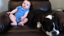 Ce bébé pète devant un chien presque endormi, la réaction de l'animal va vous faire tordre de rire