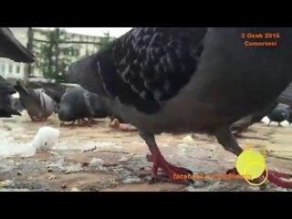 Dursun Ali Erzincanlı/Kış ve kuşlar