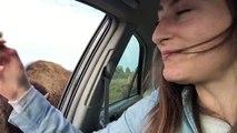 Avez-vous déjà vu Un bisou qui veut rouler une pelle ?