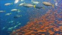 Un nouveau monde sauvage - Les océans