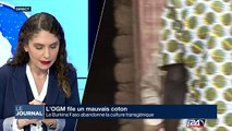 L'OGM file un mauvais coton au Burkina Faso