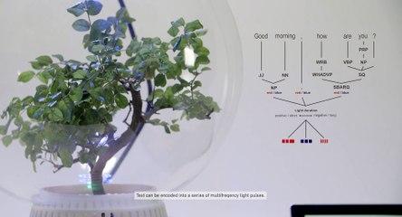 Microsoft lavora a Florence: come parlare con le piante