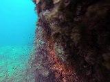 Cigales de mer - Galeria - Corse