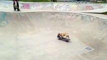 Skateboarding French Bulldog Puppy Enjoys Skate Bowl