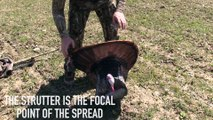 How to Set a Turkey Decoy Mega Spread