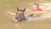 Ils sauvent des chevaux de la noyade lors des inondations au Texas