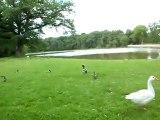 Bergerie Nationale Rambouillet Oies Canards