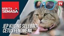 Jep Kucing Selebriti Cetus Fenomena