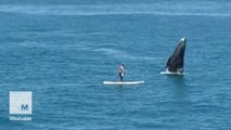 Whale breaches right next to an unsuspecting paddleboarder