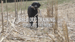Shed Dog Training: Simulate the Hunt