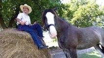 Meet Remington, former tallest horse record holder - Guinness World Records Classics