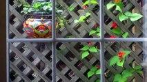 Hummingbird Kisses for Flowers