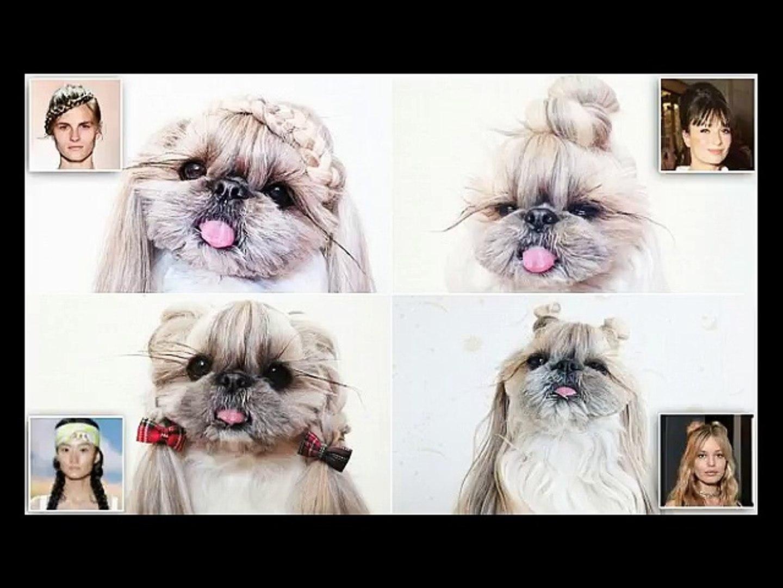 cat hair styles