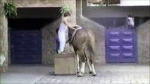 Un chien fait fuir des enfant et s'en va à dos de cheval... WTF