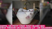 Zappa, un petit chat tout blanc qui s'est trouvé un nouveau lit : un saladier ! Tout de suite dans la Minute Chat #197 !