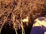 Técnicos de Medio Ambiente rescatan garza atrapada entre matorrales en el Lago Enriquillo.wmv