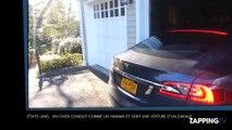 Etats-Unis : un chien conduit comme un humain et sort une voiture d'un garage ! (Vidéo)