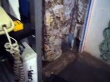 gemelas pelioneras