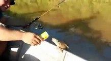 Рыбаки дают пиво рыбе - Fishermen give fish beer