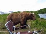 Quand un ours vient s'asseoir à coté de toi, tranquille! Flippant....