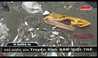 Cá chết hàng loạt dọc bờ biển