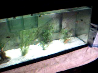future aquaponic fish update #2