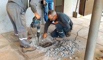 Sauvetage : 4 chatons coincés dans les canalisations