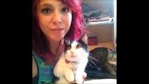 Los Mejores Vines de Gatos del 2015! Recopilación Gatos Graciosos