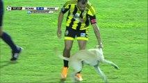 Un chien veut jouer et s'incruste en plein match de Copa Libertadores