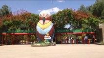 Hayvanat Bahçesinde Yavru Baykuş Sevinci
