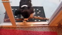 Funny and cute dog fails compilation 2016 - Dogs with sticks version