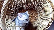 Funny Cats May 2016 Vedios : Funny Animal Videos for Kids Cute Kitten Compilation Funny Cat Videos Youtube Funny Animal