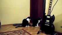 Кошка просит прощения... типичная женщина...)))) Cat asks for forgiveness ... typical woman ...))))