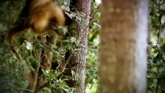 c-h-a-n-n-e-l animals documentaries The Ri of Black Wolf Na documentary Animal p