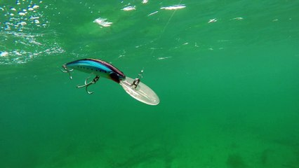 When to Use Wood or Plastic Fishing Lures | Sport Fishing