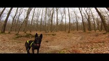 GoPro Hero 3 : Cani Vtt Berger Hollandais 2