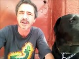 Bad dog owner with Vegan Dog, Vegan unhealthy for K9. Peter Caine Brooklyn dog training